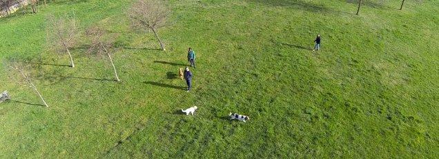 In volo col mio drone sugli amici a quattro zampe